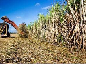 2305-20237-tanzanie-ecoenergy-africa-ab-investira-500-millions-dans-la-production-de-sucre-d-ethanol-et-d-energie_L