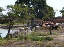 Sangoulema