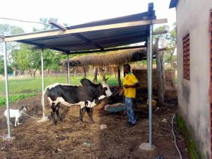 hangar embouche bovine